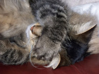 cat_FACEPALM2.jpg