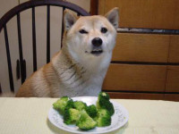 dog_broccoli.jpg