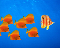 water_fish_windows_xp_desktop_1280x1024_hd-wallpap.jpg