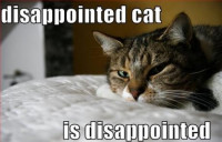 disappointed-cat-is-disappointed-lolcats-yeyF7P.jpg