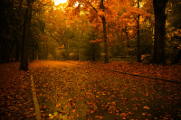 route_d__automne_by_bloodpromiser-d299wj7.jpg