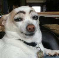 eyebrow-dog.png